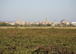 Bodegas Corellanas- vineyard