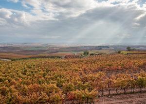 Bodegas Jer vineyard landscape in Spain
