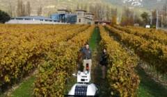 bodegas puelles slender rows of grapevines on vineyard near winery in spain