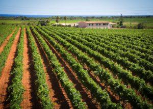 Bodega Vi Rei vineyard located in Spain
