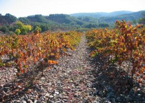 beautiful vineyard of Bodegas y Viñedos del Jalón SA winery in Spain