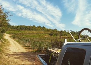 Vineyard Of Boscaini Carlo Winery