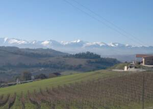 The VIneyards of Cantina Ortenzi