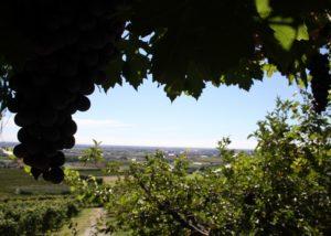 view from the vineyard of cantina tamburino sardo di fasoli adriano & figli