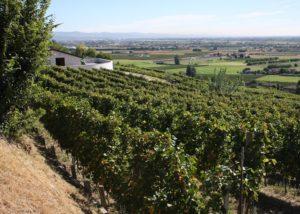 vineyards of cantina tamburino sardo di fasoli adriano & figli
