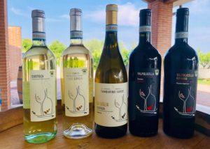 various bottles of wine by cantina tamburino sardo di fasoli adriano & figli