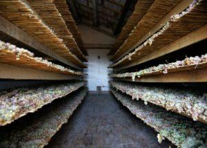 Cellar room of the Cantina Terracruda winery