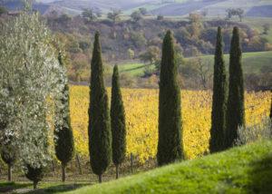 Vineyard Of Capua Winery
