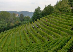 Vineyards Of Ca'Richeta Di Orlando Enrico Winery