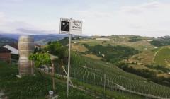 Vineyard Of Cascina Delle Rocche Di Moncucco Winery