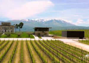 vineyard of castorani