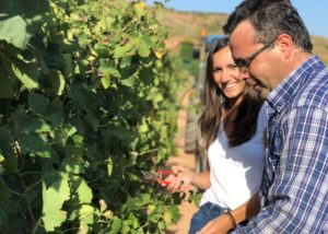 celler grau i grau winemakers inspecting grapevines on vineyard near winery