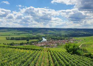 Vineyard Of Champagne Naveau Winery
