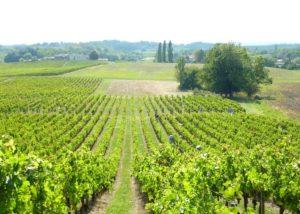 Vineyard Of Clos Monicord Winery