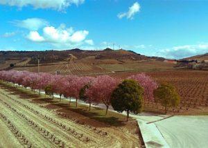 Consejo De La Alta beautiful vineyard located in Spain