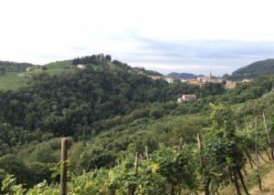 Vineyard Of Crodi Winery