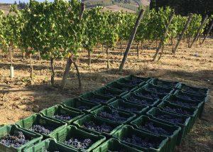 Harvest At Davinum Winery