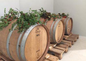 Tenuta Valle delle Ferle barrels laying in winery cellar in Italy