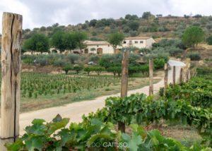 Tenuta Valle delle Ferle estate overview in Italy