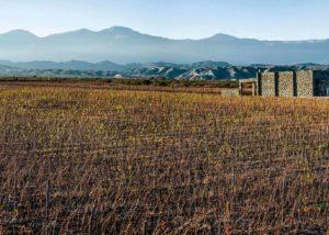 estancia los cardones slender rows of vines on vineyard and amazing mountains
