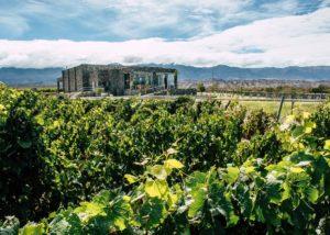 estancia los cardones lush grape vines on a backdrop of the estate