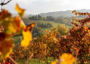 puianello e coviolo colorful vineyards near winery in italy