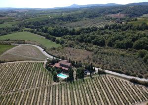 Vineyard Of Fanetti Winery