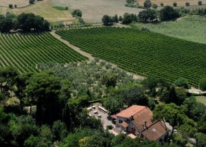 Vineyard Of Fattoria Lucesole Winery