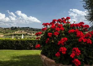 Flowers At Fattoria Svetoni Winery