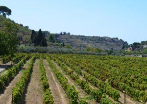 Tenuta Valle delle Ferle vineyard located in Italy