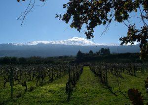 Vineyards Of Girolamo Russo Winery