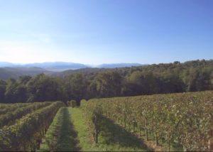 Vineyard Of La Cave Des Producteurs De Jurançon Winery