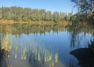 lake near la chimera d'albegna