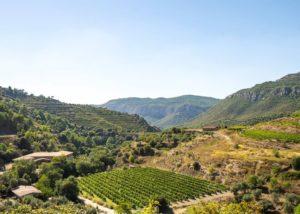 Winery Estate View Of The La Conreria D'Scala Dei Winery