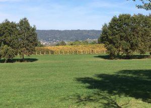 Vineyards Of La Masera Winery