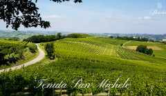Vineyard Of La Patareina Winery