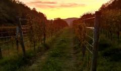 Vineyards Of La Rajade Winery