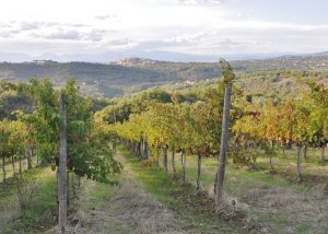 Vineyard Of Le Masciare Winery
