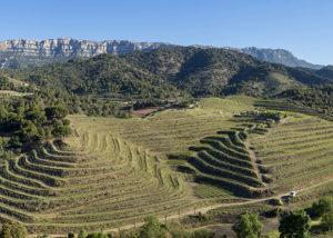 Maius Viticultors vineyard bird view in Spain