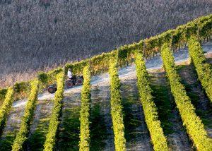 Vineyard Of Monti Winery