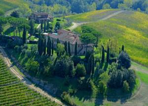 aerial view of the vineyard of mormoraia