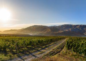 vineyard of noa