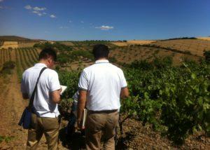 people walking thorugh Bodegas y Viñedos del Jalón SA vineyard in Spain