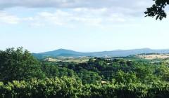 Vineyard Of Poggio Cagnano Winery