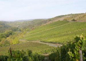 Beautiful terrace vineyard view of Prinz Salm winery