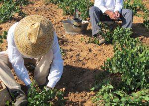 Two Man Working At Tenuta Bastonaca Winery