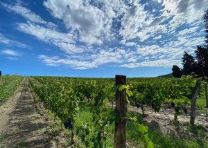 Vineyards Of Tenuta Di Artimino Winery