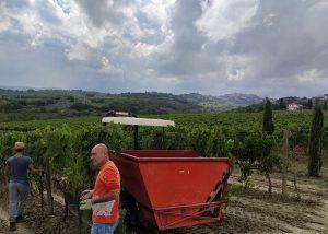 Men And Tractors Working At Tenuta Valdipiatta Winery