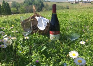 Wine Bottle In The Vineyard At Torti L'Eleganza Winery