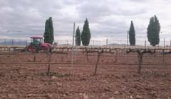 tractor going through Viñedos y Bodegas Asensio Carcelén vineyard